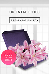 Oriental Lilies -Boxed